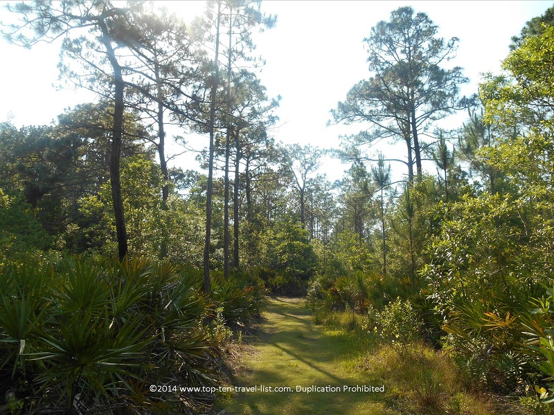 Views of the forest at Brooker Creek Preseve in Tarpon Springs, Florida