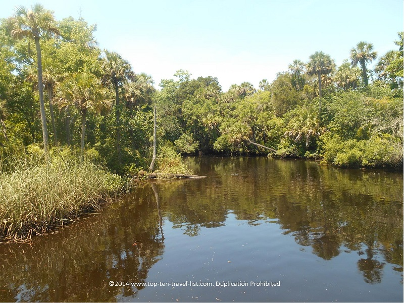 Trees reflecting on the river - James E. Grey Preserve - New Port Richey, Florida