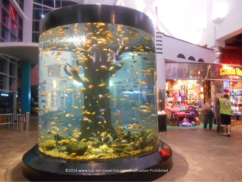 Large fish tank at Ripley's in Myrtle Beach, SC