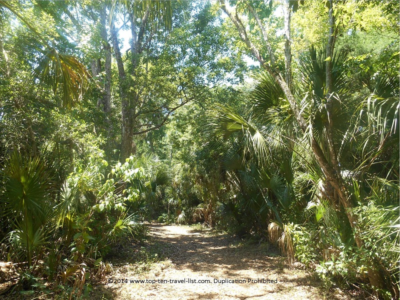 Beautiful tree lined paths at the James E. Grey Preserve in New Port Richey, Florida