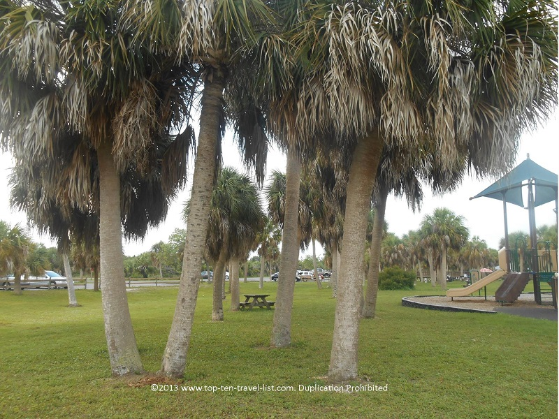 Picnic area with palm trees - Honeymoon Island State Park