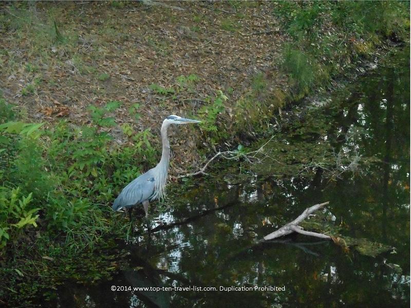 Bird at John Chestnut Park - Palm Harbor, FL