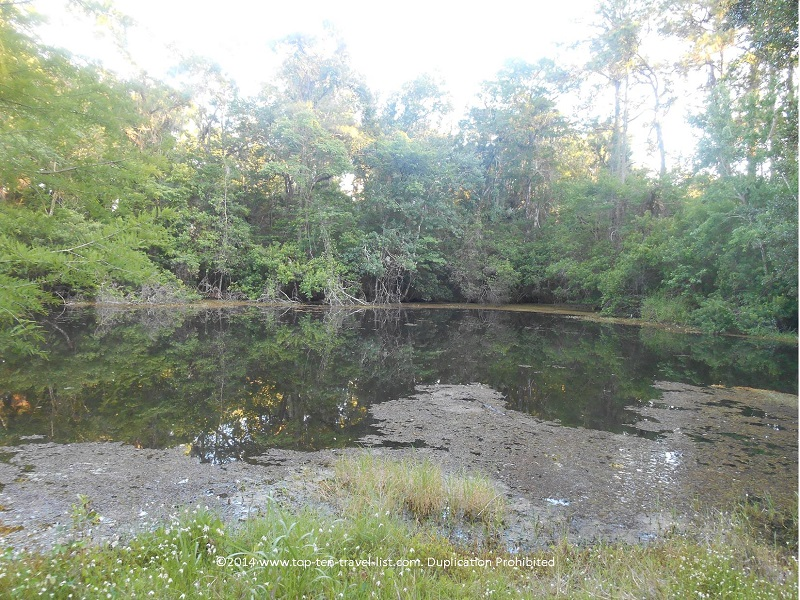 Swamp at John Chestnut Park in Palm Harbor, Florida