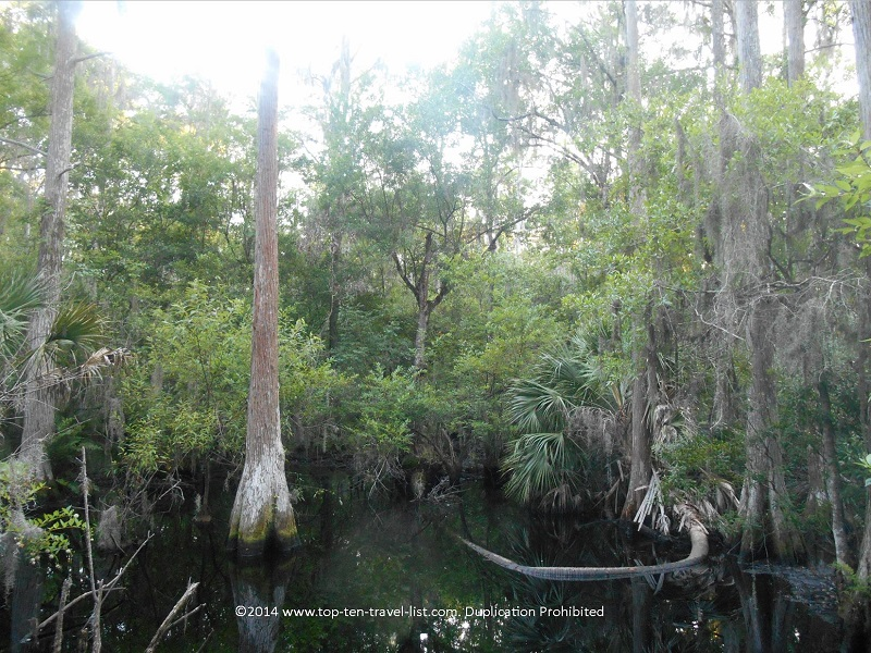 Swamp views at John Chestnut Park - Palm Harbor, FL