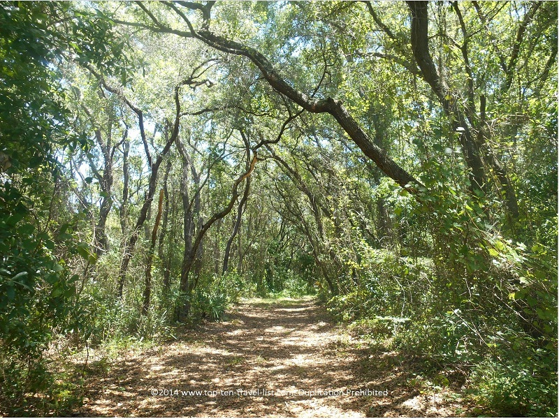 Tree lined views on the James E. Grey Preserve in New Port Richey, Florida