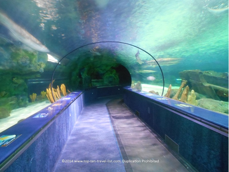 Tunnel of sharks at Ripley's Aquarium in Myrtle Beach, SC