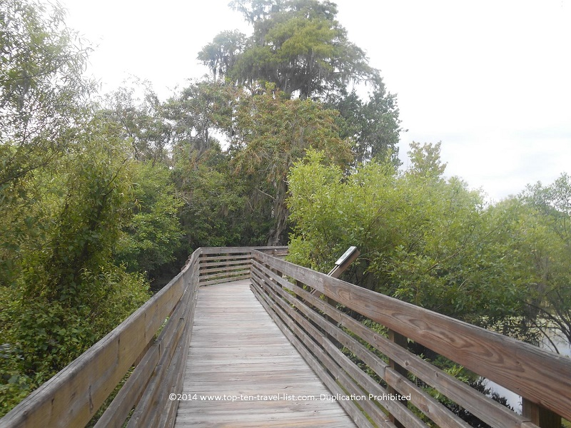 The boardwalk at Lettuce Lake Park in Tampa, Florida