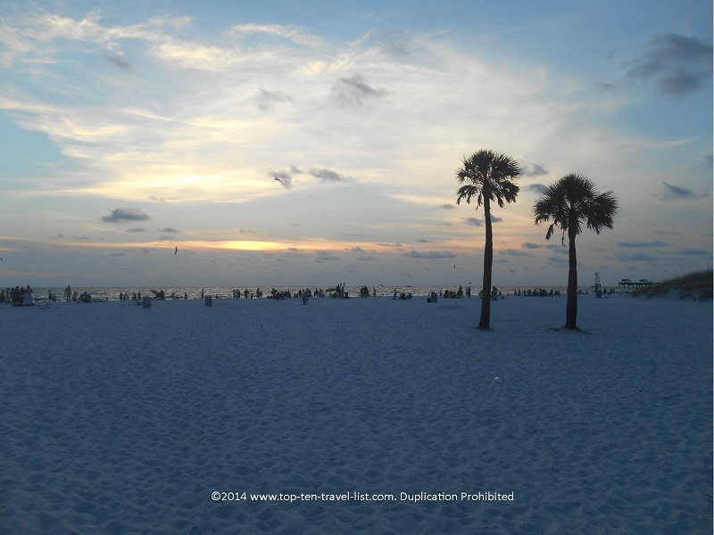 Palm trees at sunset - Clearwater Beach in Florida