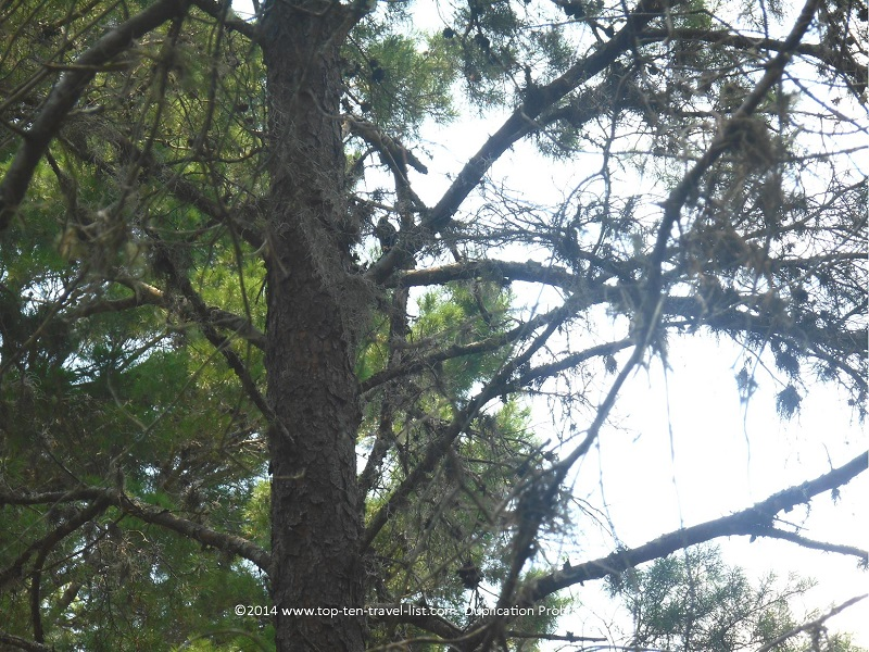 Woodpecker at Jay B. Starkey Wilderness Park in New Port Richey, FL