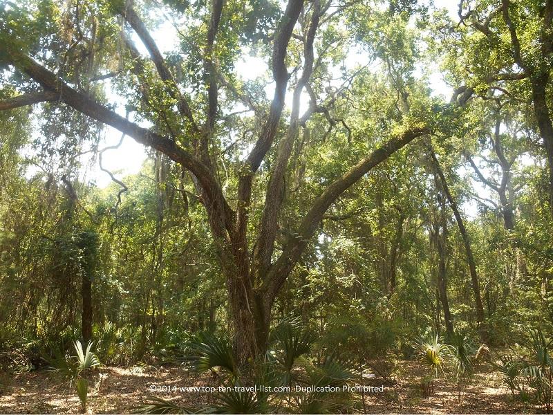 Beautiful natural Florida scenery at Jay B. Starkey Wilderness Park - New Port Richey, FL