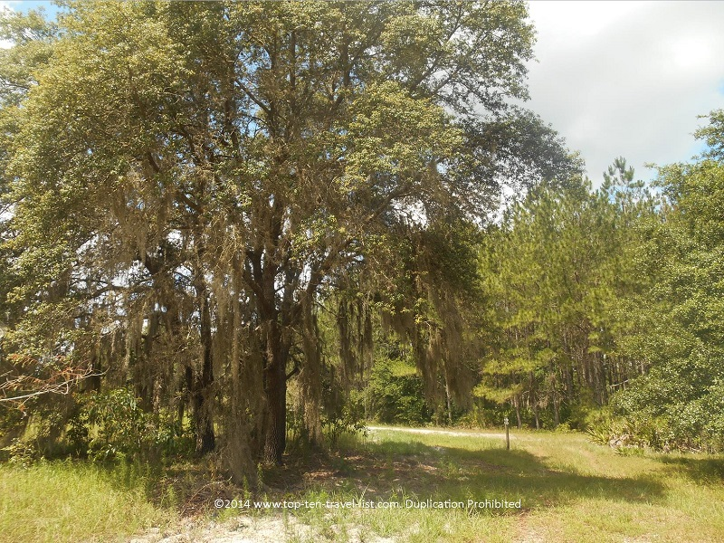 Trail at Conner Preserve in Land O'Lakes, Florida
