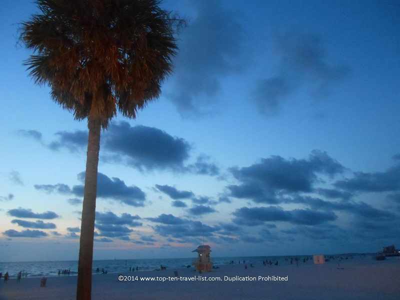 Palm tree at Clearwater Beach in Florida