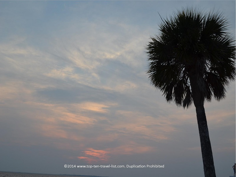 Palm tree at Fred Howard Park beach - Tarpon Springs, Florida