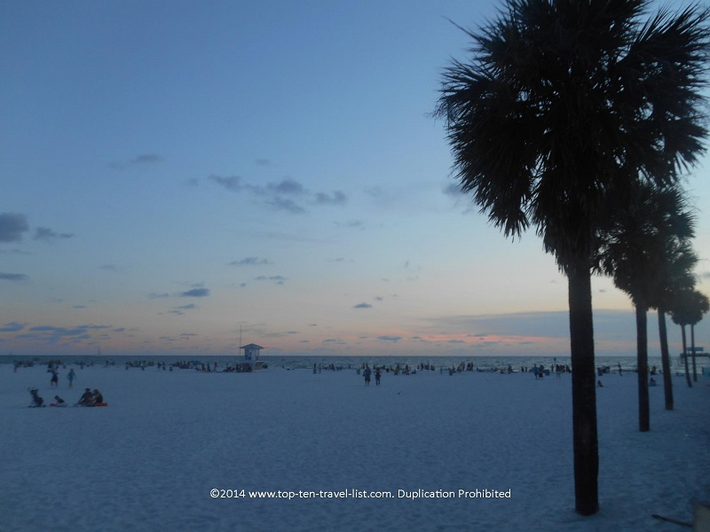 Palms lining Clearwater Beach in Florida