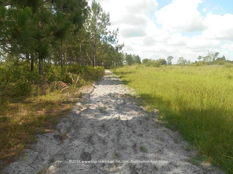 Sandy trail at Conner Preserve in Land O'Lakes, Florida