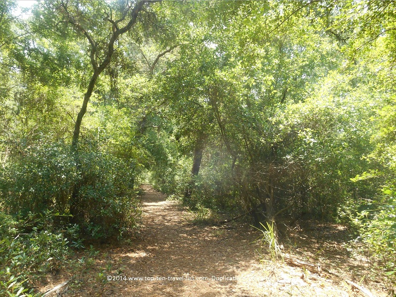 Shaded trail at Jay B. Starkey Wilderness Park - New Port Richey, FL