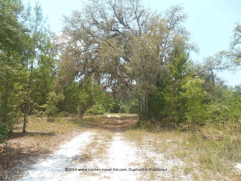 Pretty Spanish moss tree on the Jay B. Starkey Wilderness Trail - New Port Richey, FL