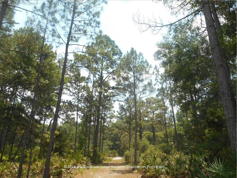 Forested views on the Jay B. Starkey Wilderness trails - New Port Richey, FL