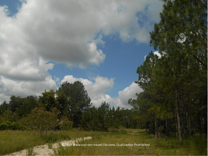 Walking through the trails at Conner Preserve in Land O'Lakes, Florida