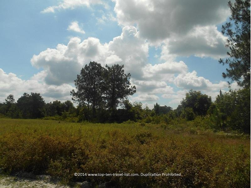 Trail views at Conner Preserve in Land O'Lakes, Florida