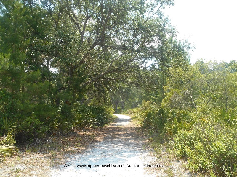 Shady trail views at Jay B. Starkey Wilderness Park - New Port Richey, FL