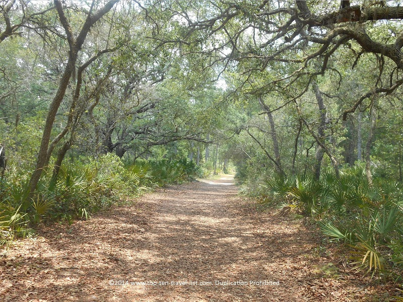 Pretty tunnel of trees at Jay B. Starkey Wilderness Park in New Port Richey, FL