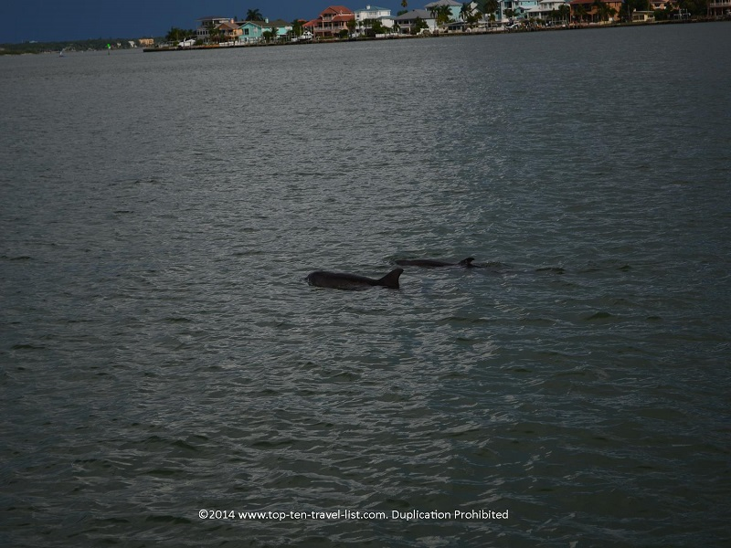 Up close views of 2 dolphins - Madeira Beach, Florida