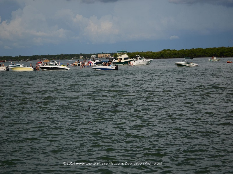 Sandbar party and 2 dolphin fins - Madeira Beach, Florida Hubbard's Marina cruise