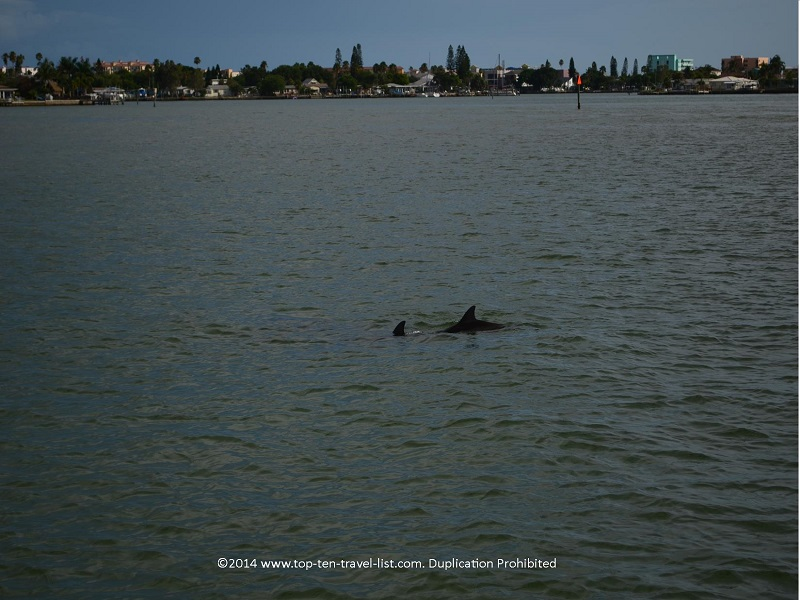 2 dolphins spotted in Madeira Beach, Florida