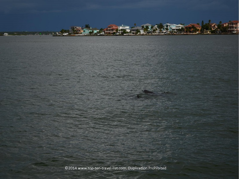 3 dolphins spotted in Madeira Beach, Florida