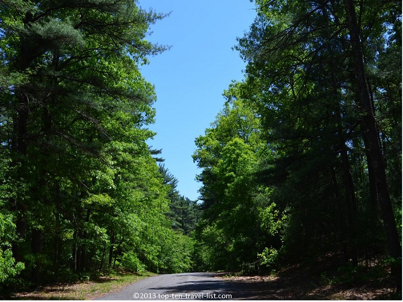 Scenic forest views at Massasoit State Park