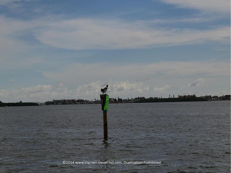Bird sitting still on a post - Madeira Beach, Florida Hubbard's Marina cruise