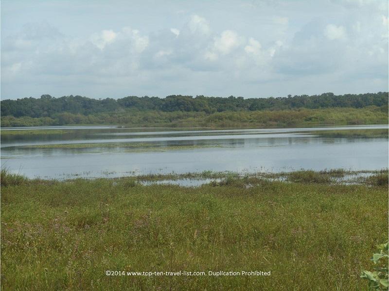 Birdwalk views at Myakka River State Park - Sarasota, Florida