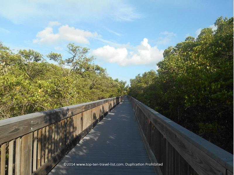 Trees lining the boardwalk at Weedon Island Preserve in St. Petersburg, Florida