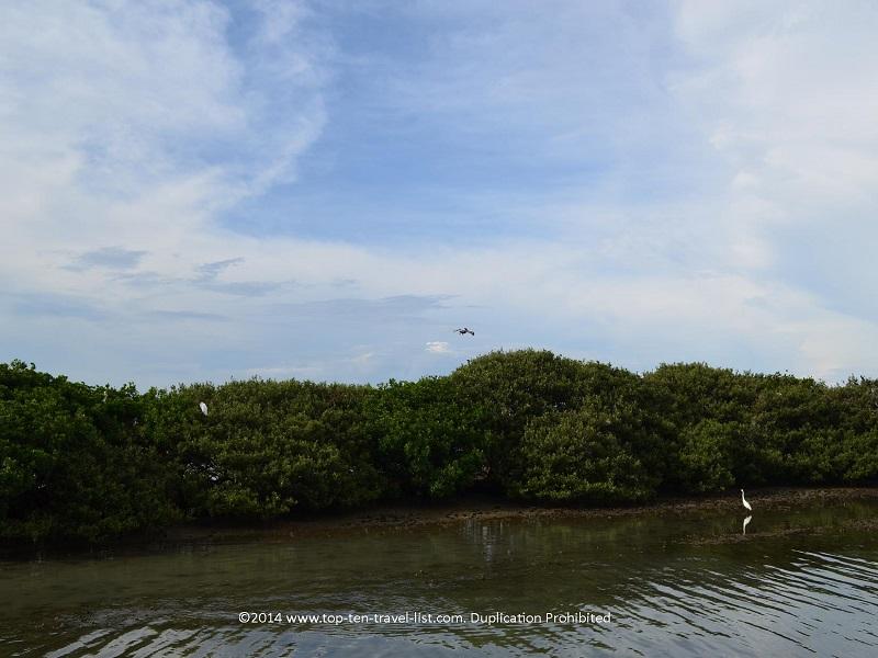 Dogleg Key Bird Sanctuary - Madeira Beach, Florida