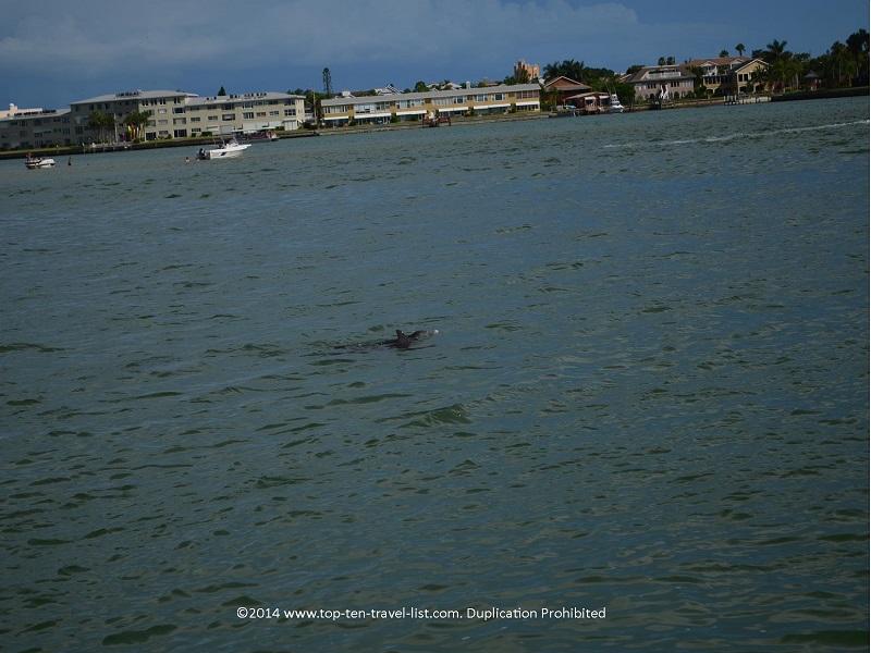 Dolphin - Madeira Beach, Florida
