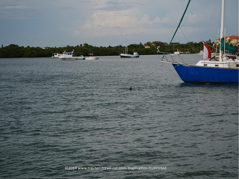 Dolphin spotted by a boat - Madeira Beach, Florida cruise