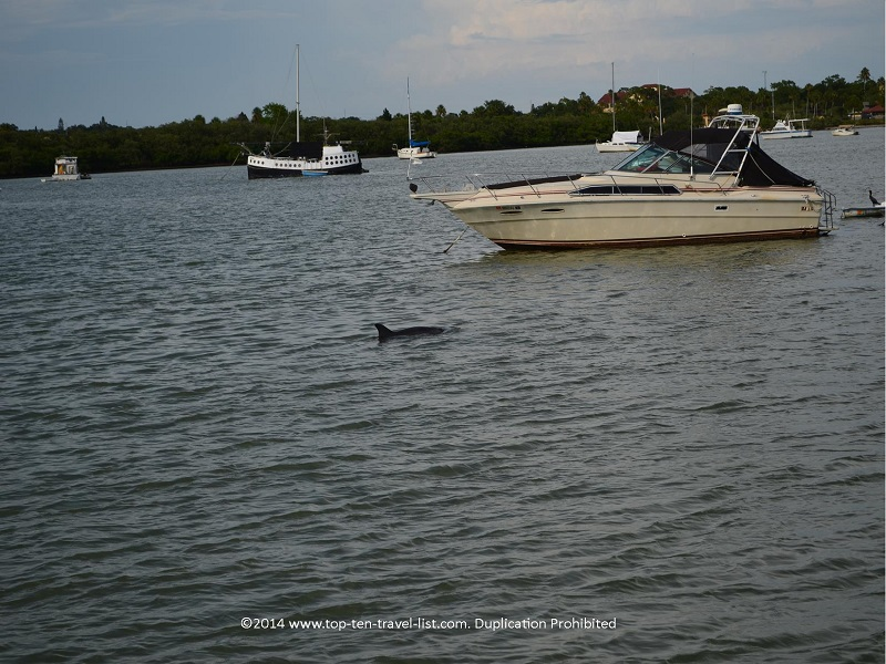 Dolphin spotted near a boat - Madeira Beach, Florida cruise