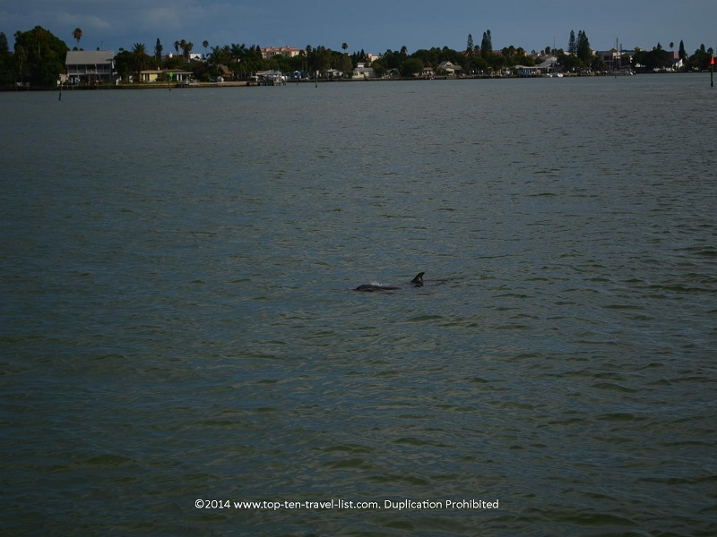 Great dolphin view - Madeira Beach, Florida cruise