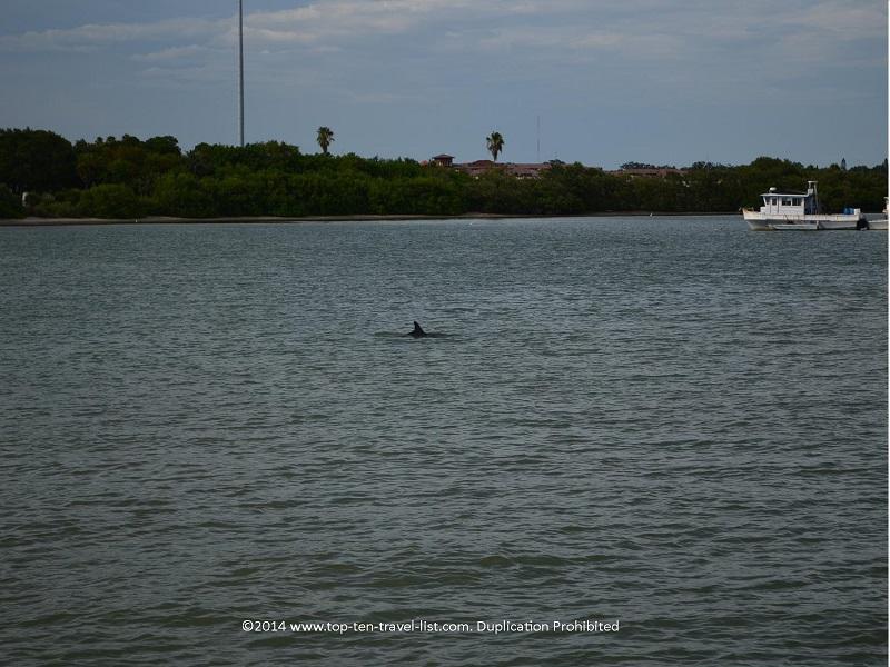 Dolphin - Madeira Beach, Florida cruise
