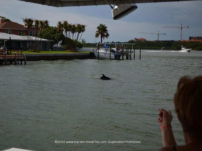 A dolphin spotting on Hubbard's Marina dolphin cruise -Madeira Beach, Florida