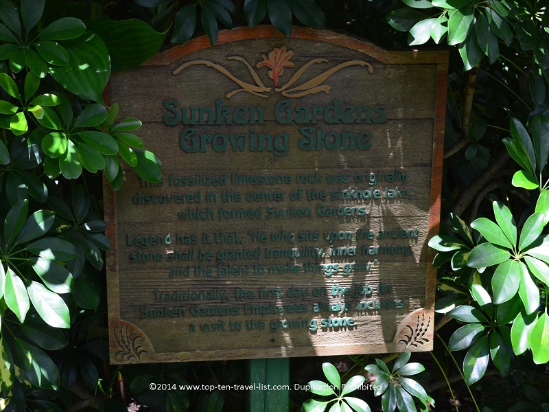 Growing Stone at Sunken Gardens in St. Petersburg, Florida