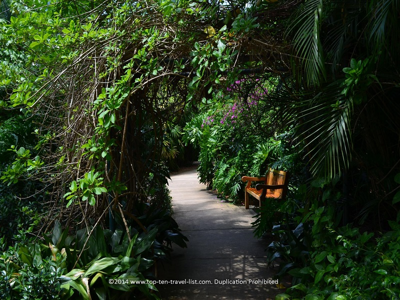 Shaded path at Sunken Gardens in St. Petersburg, Florida