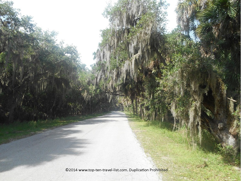 Beautiful tree lined views at Myakka River State Park in Sarasota, Florida