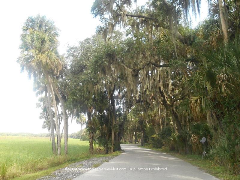 Shady views along the 7 mile scenic path at Myakka River State Park in Sarasota, Florida