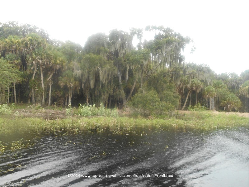 Beautiful scenery along the Upper Myakka Lake - taken from the Gator Gal airboat ride