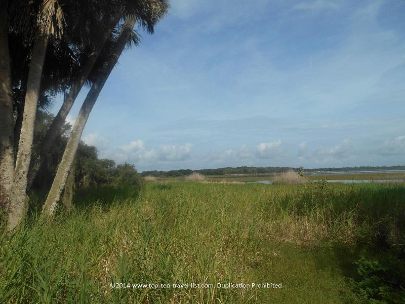 Scenic views from the Myakka River State Park scenic path - Sarasota, Florida