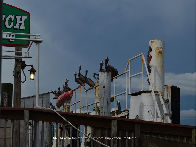 Pelicans lined up at Hubbard's Marina - Madeira Beach, Florida