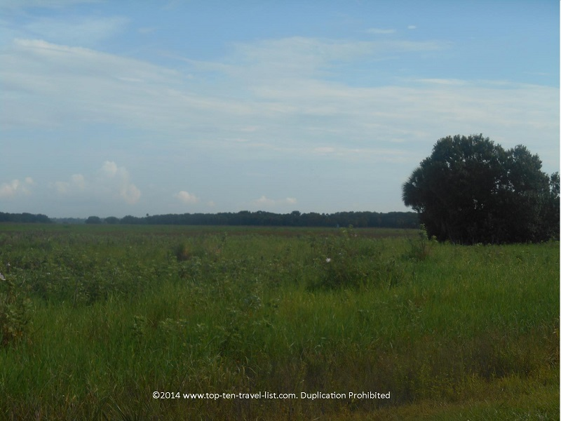 Beautiful green views at Myakka River State Park in Sarasota, Florida