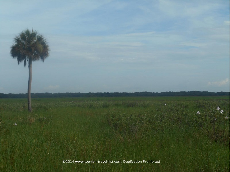 Beautiful open land at Myakka River State Park